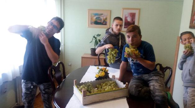 dselo-grozdje